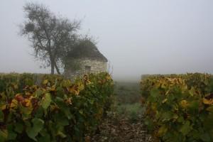 cabanes de vignes